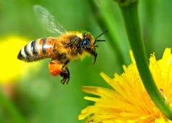 Sauvez les abeilles! -Save the bees!
