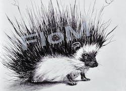 Dessin-Hérisson-Animal-gravure-stylo bille
