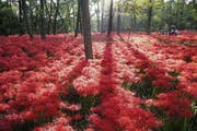 Red flower forests